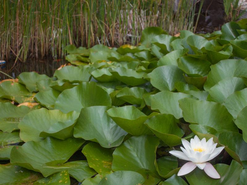 Teich Garten Mainz Wörrstadt Nieder-Olm